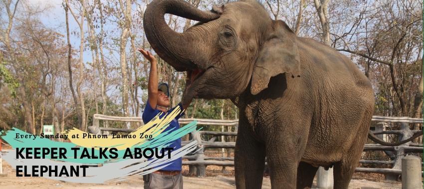Keeper talks about elephant